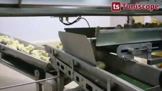 Visite de l'abattoir de poulet EL Mazraa et l'unité de production de Salami