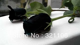 flowers id...