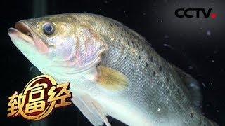 《致富经》 20190515 他靠一口神秘的缸 让鱼的利润翻10倍| CCTV农业