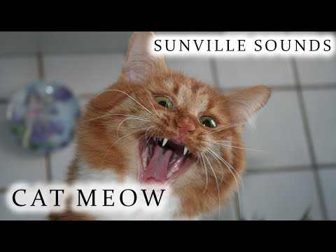 10 Hours of Cat Meowing