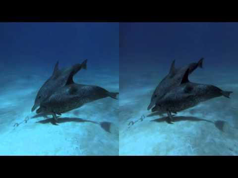 Delfines y ballenas 3D SBSinaki
