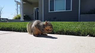"""""""Sparky The Squirrel"""" Meets DJI OSMO Pocket"""