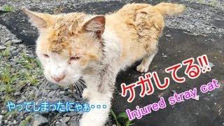 そんな・・傷だらけで帰宅★A wounded wild cat came home thumbnail
