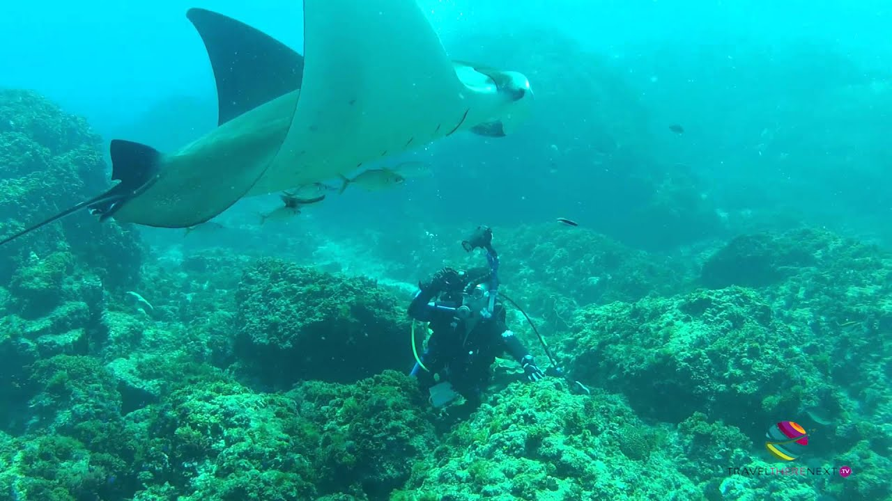 Diving with manta rays julian rocks byron bay nsw youtube - Dive byron bay ...