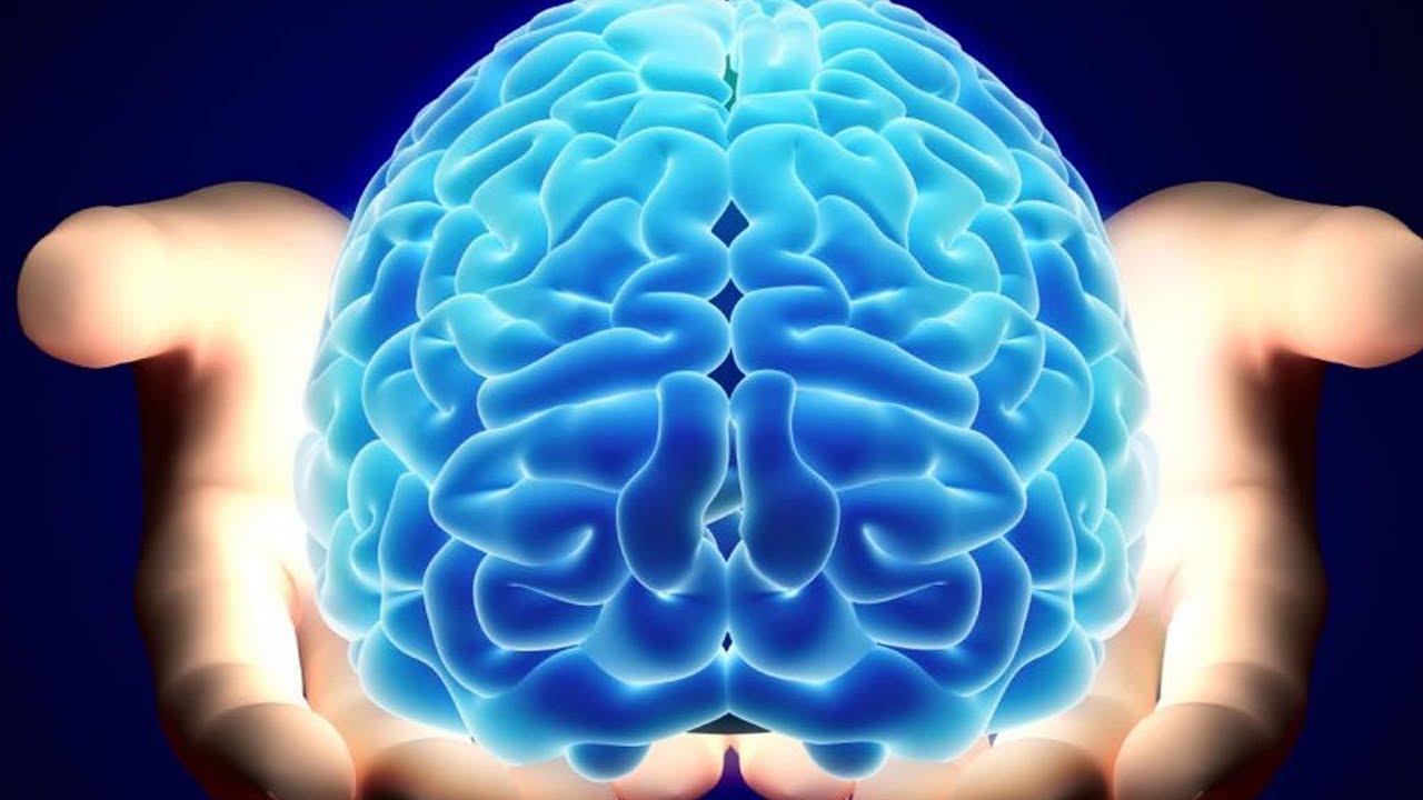 Зависит ли ум от размера мозга | DeeaFilm