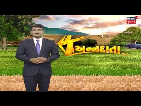Benefits of Organic fertilizer in Farming   News18 Gujarati   Watermelon farming   Green Chilli