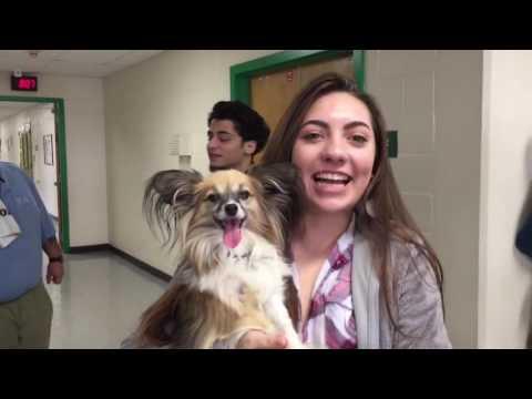 Hillwood High School Puppy Play Pen