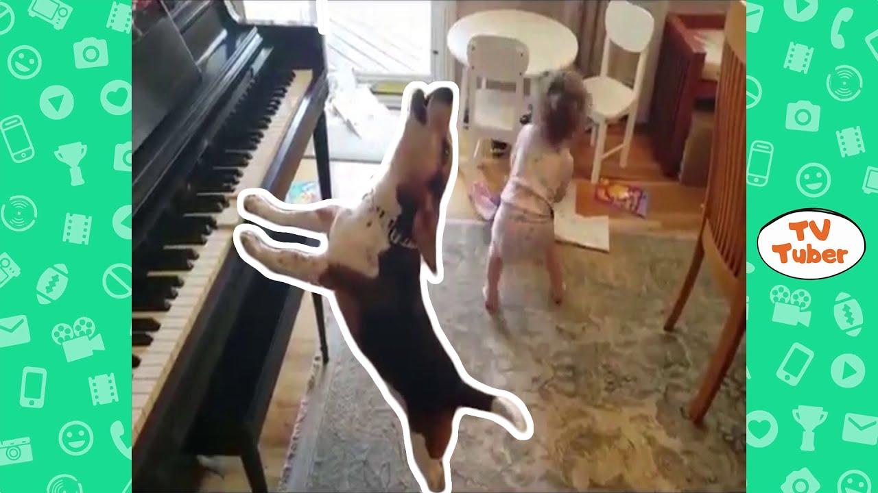 Faze comice cu animale 2020 | Filmulete amuzante cu animale (Incearca sa nu RAZI) | Comedie | Fails