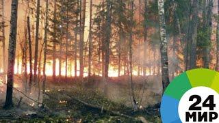 В огне и дыму: в России борются с лесными пожарами