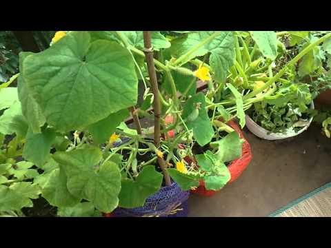 Видео Ролики Нарезка Овощей