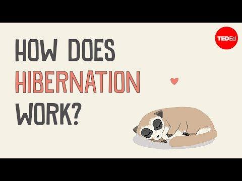 how-does-hibernation-work?---sheena-lee-faherty