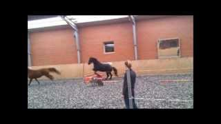 Pony-Ranch Lanwermann 2012