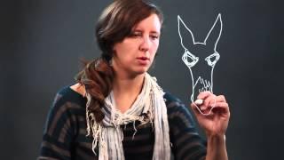 How to Draw Donkey Eyes