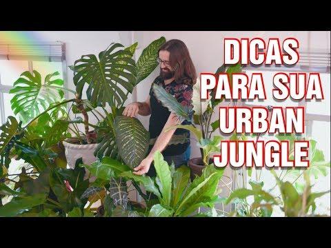COMO DECORAR Sua SALA Com PLANTAS - Decoração De Sala Com Plantas Ornamentais