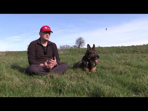 Britain's Got Talent stars PC Dave Wardell and his retired police dog Finn - Finn's Law