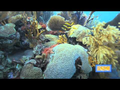 APPETITE FOR EXTINCTION lionfish bermuda