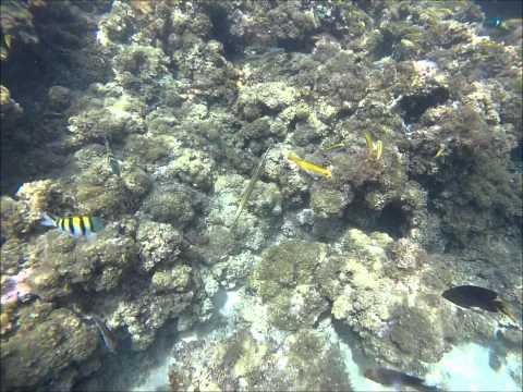 Honeymoon Jamaica- Jewel Dunn's River