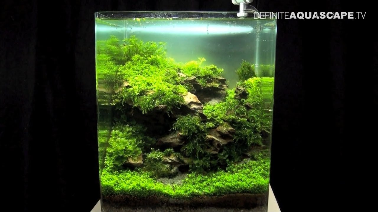 Aquascaping   The Art Of The Planted Aquarium 2013 Nano Pt.2   YouTube