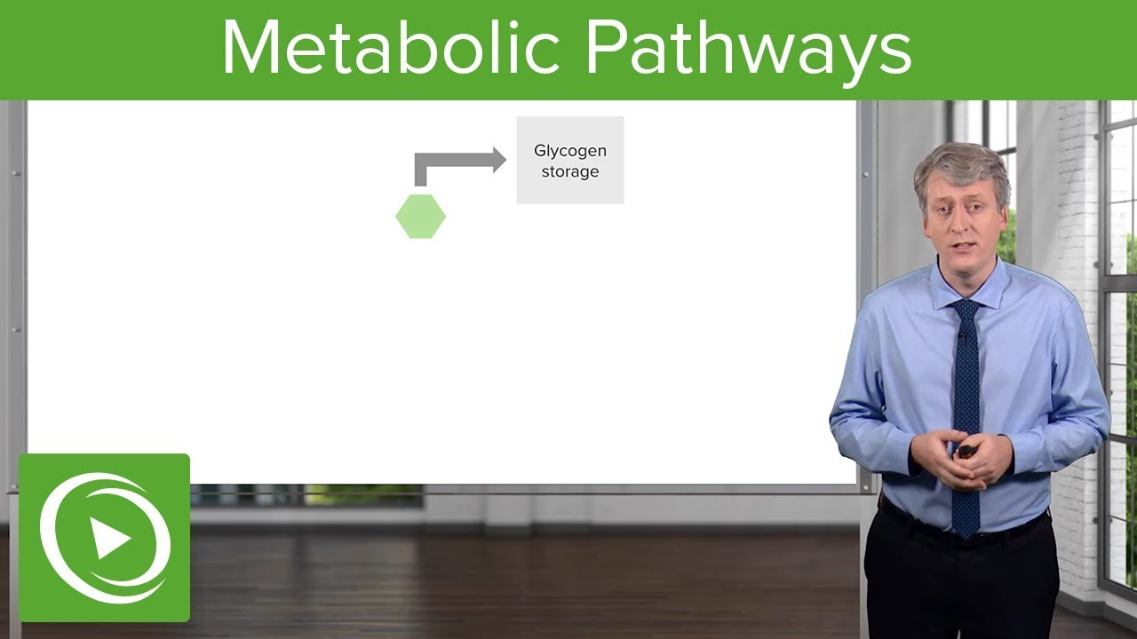 Inborn Errors of Metabolism: Metabolic Pathways – Pediatrics | Lecturio