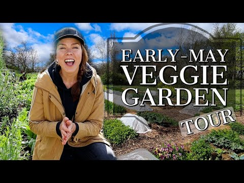 Vegetable Garden Tour Early-May 2021: Zone 6a, Ohio