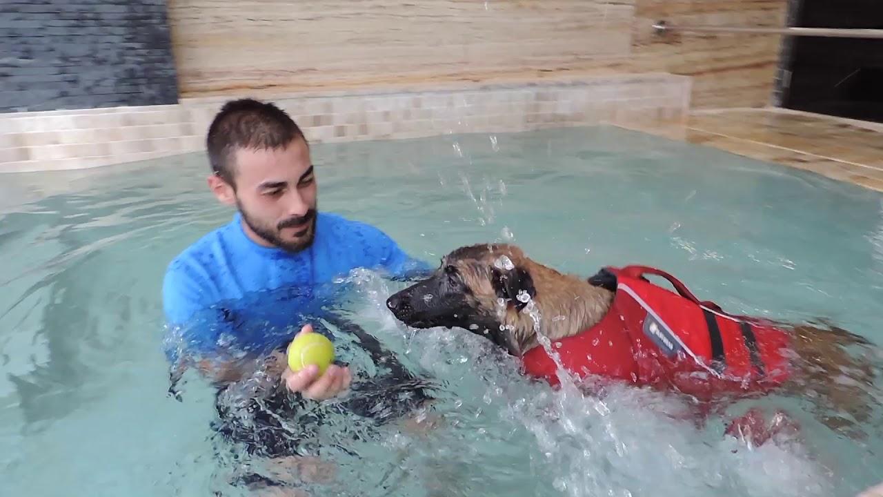 Resultado de imagen para hidroterapia canina