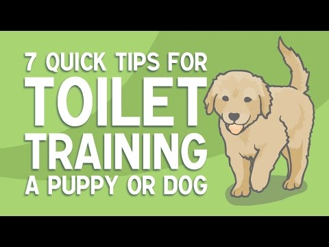 7 Quick Tips for TOILET TRAINING a Puppy or Dog
