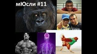 Правильный Бодибилдинг. Сашины мЮсли #11. Бокс. Феномен Васи Ломаченко. Ментцер. Курица без головы