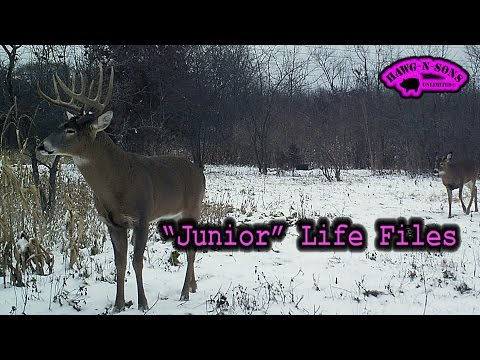 Pursuit Legendary Whitetail Buck Deer Hunting 2015 Junior Life Files