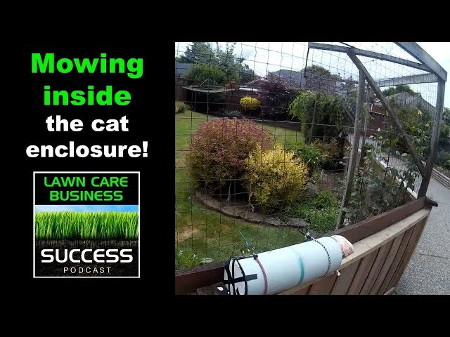 Mowing inside the cat enclosure!