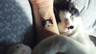 20 ярких идей тату с грациозными котиками