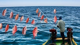 RED SNAPPER FISH CATCHING AT DEEP SEA