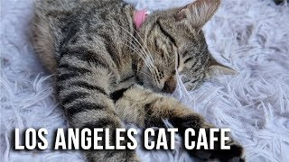 LA's Cat Cafe! Cuteness OVERLOAD! - Crumbs and Whiskers