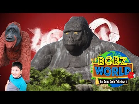 Bobz World Jungle Self Guide Tour Experience