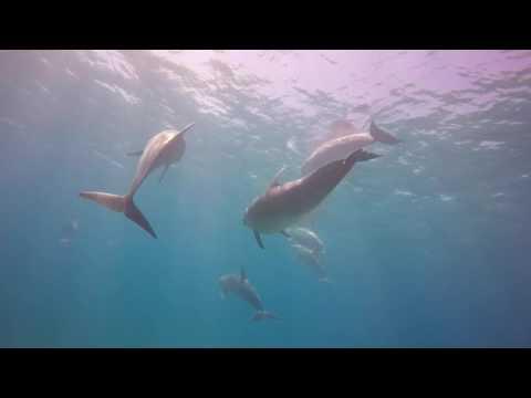 Dolphins Quirimbas Mozambique