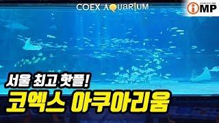 ASMR 서울 여행 코엑스아쿠아리움 COEX AQUAR…