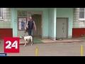 Нападение бойцовой собаки в столице: хозяин задержан, а потом отпущен