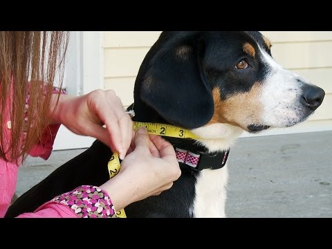 How To Measure Your Dog For Coats & Harnesses