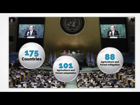 High-level Dialogue on Forests and Climate Change (COFO 23)