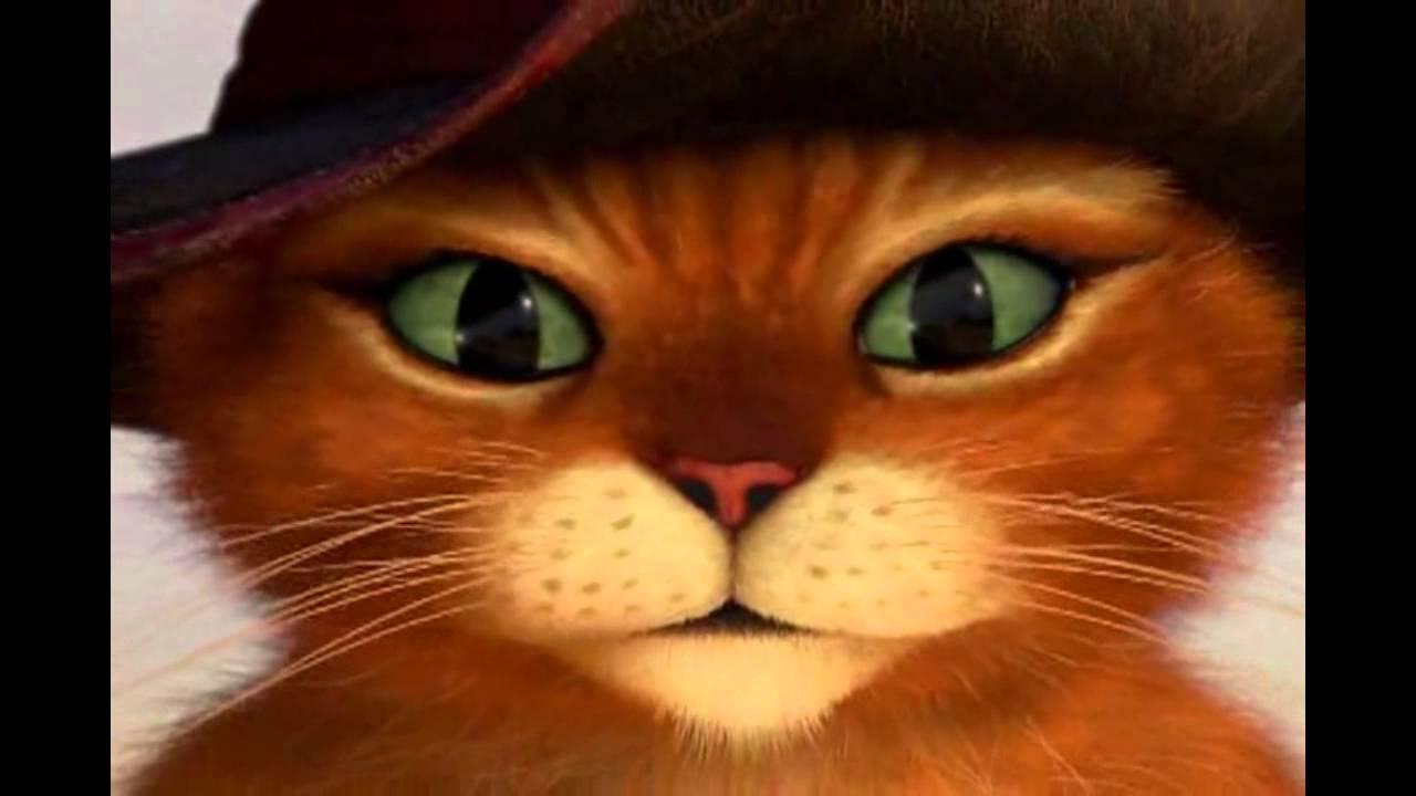 Il Gatto Con Gli Stivali Si Presenta Youtube