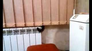 Хвостатый радиатор или кот в батарее