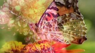 Butterfly Waltz by Brian Crain