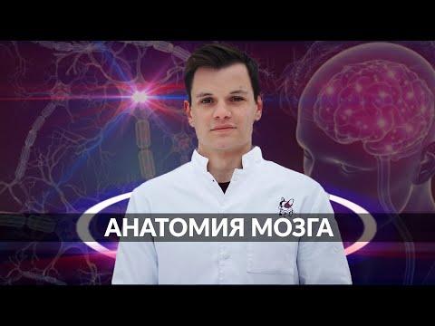 Умный Медик [УМ] - Мозг.Строение и функции.