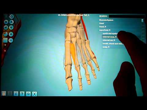 Anatronica - Human Anatomy 3D for Android Tablets and Phones