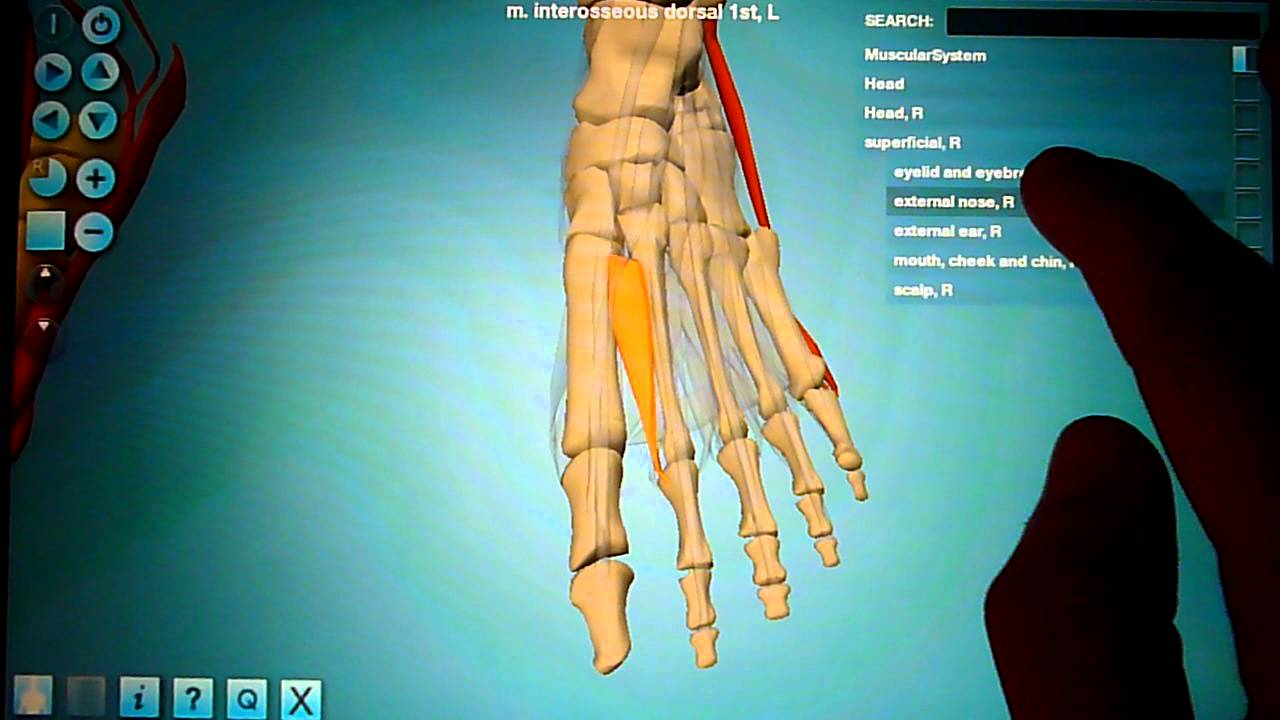 Anatronica - Human Anatomy 3D for Android Tablets and Phones - YouTube