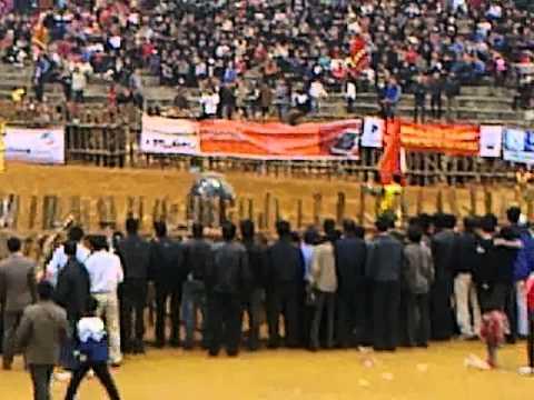 lễ hội chọi trâu Phù Ninh- Trận chung kết diễn ra trong vòng có 30s