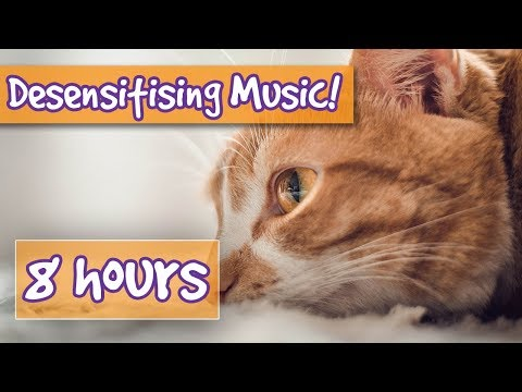 Desensitising Sound Healing Music for cats! comfort your aggressive cat , pet therapy sound effects