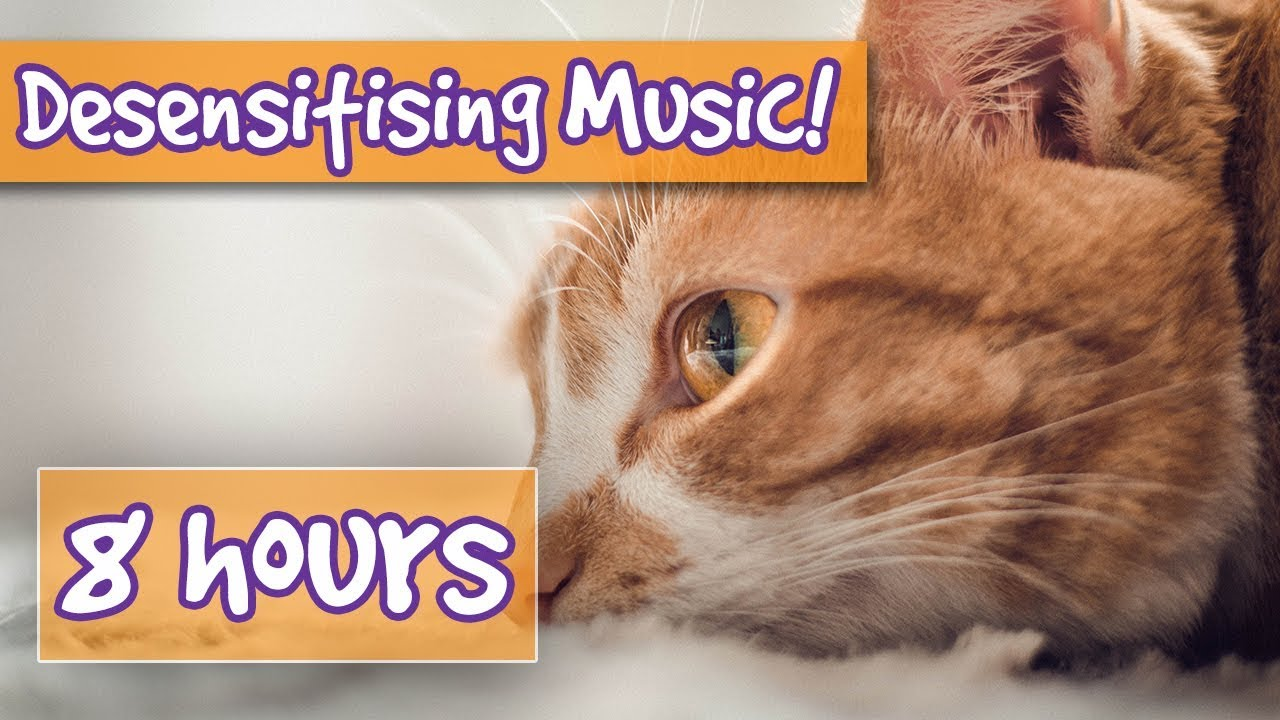 Desensitising Sound Healing Music For Cats Comfort Your Aggressive Cat Pet Therapy Sound Effects Youtube