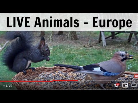 LIVE Birds From Europe! [12+ Species Observed Daily]
