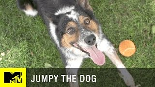 Jumpy: The Smartest Dog in Hollywood | MTV