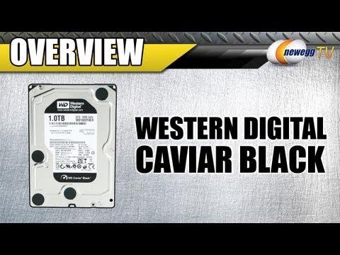 Newegg TV: Western Digital Caviar Black HDD Series Overview